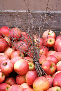Äpfel vom Jahrmakrt